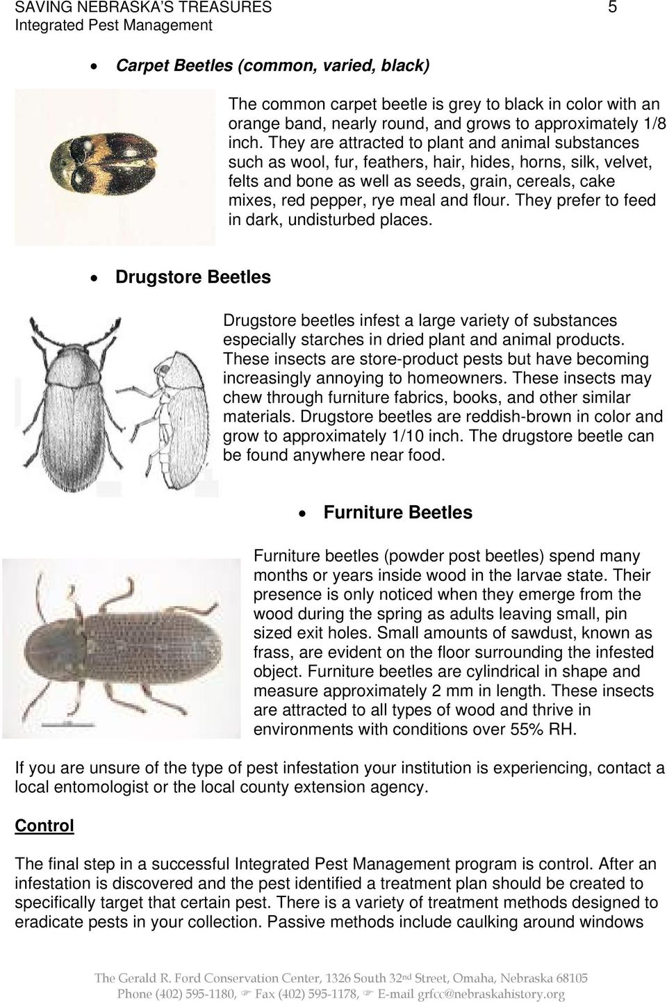 flour. They prefer to feed in dark, undisturbed places. Drugstore Beetles Drugstore beetles infest a large variety of substances especially starches in dried plant and animal products.