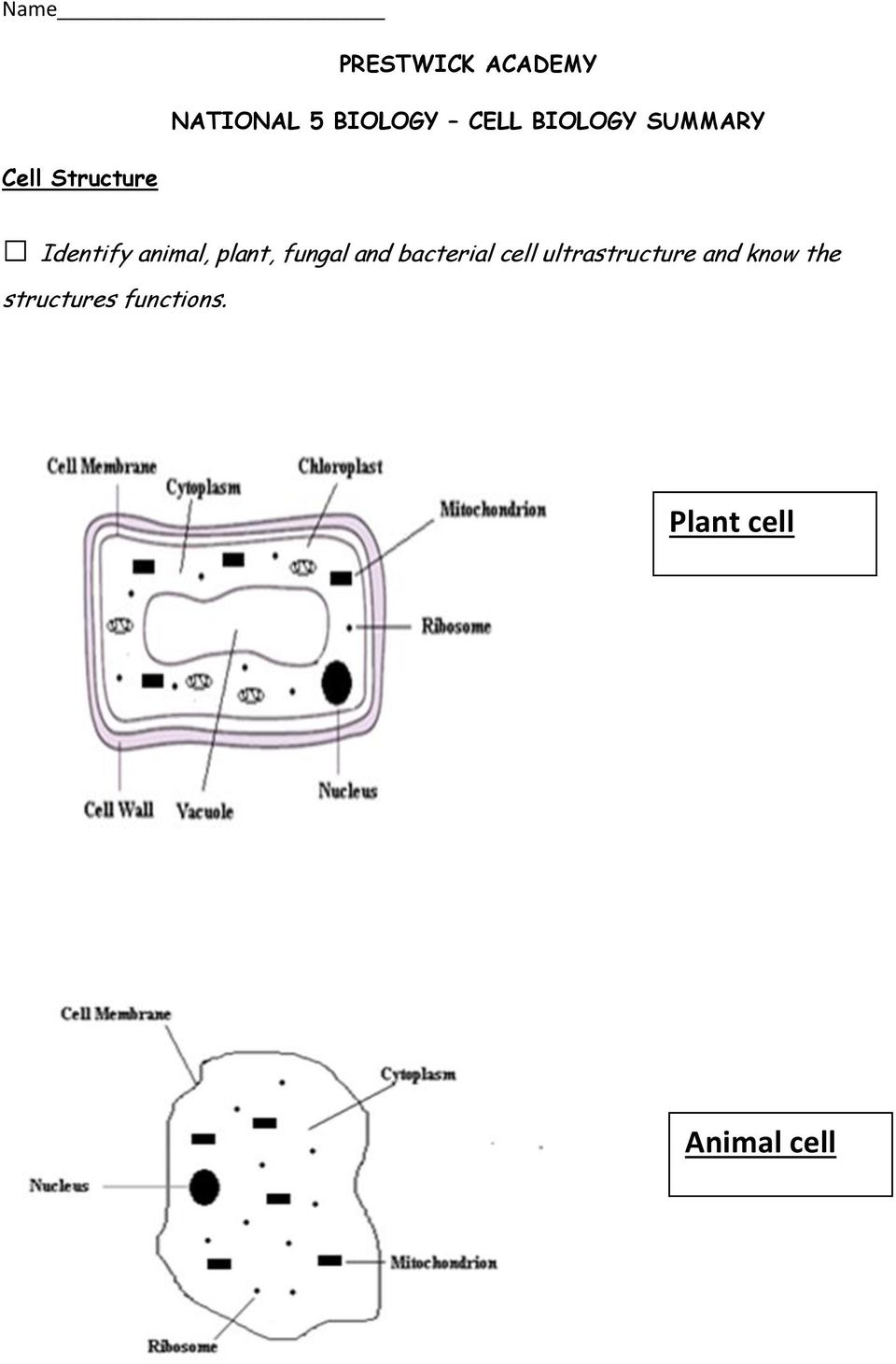 plant, fungal and bacterial cell ultrastructure