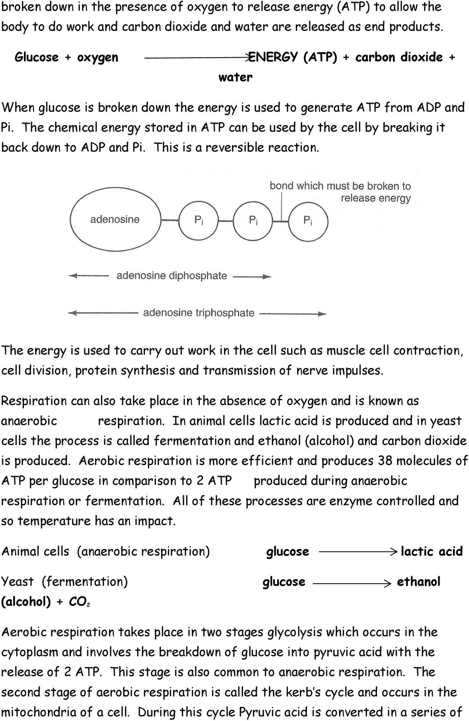 The chemical energy stored in ATP can be used by the cell by breaking it back down to ADP and Pi. This is a reversible reaction.