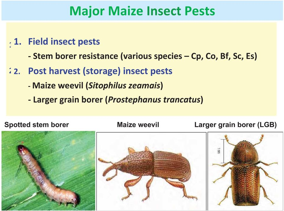 Cp, Co, Bf, Sc, Es) 2. Post harvest (storage) insect pests 2.