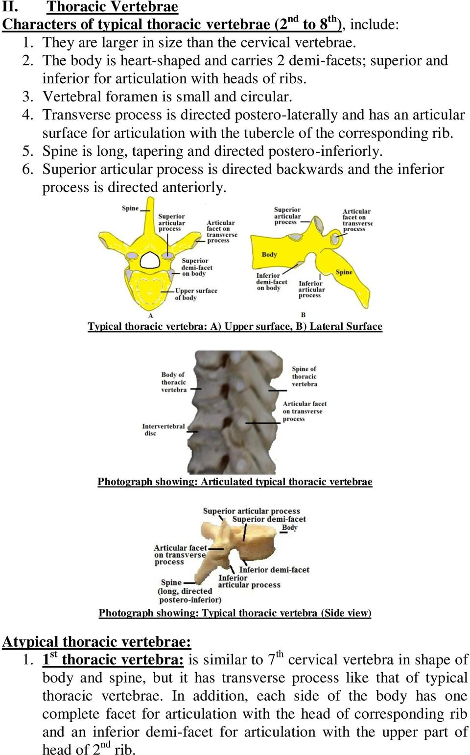 Transverse process is directed postero-laterally and has an articular surface for articulation with the tubercle of the corresponding rib. 5. Spine is long, tapering and directed postero-inferiorly.