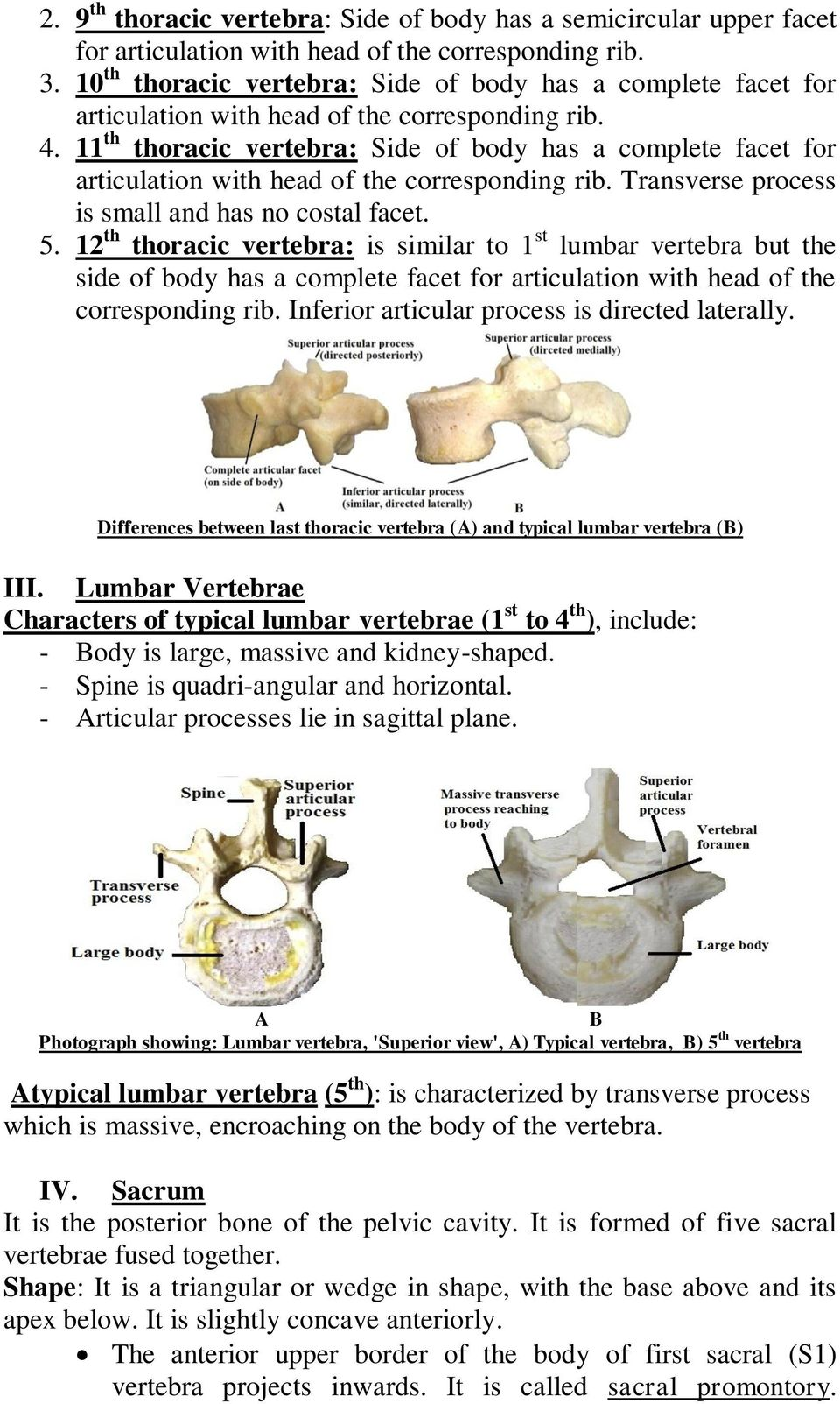 11 th thoracic vertebra: Side of body has a complete facet for articulation with head of the corresponding rib. Transverse process is small and has no costal facet. 5.