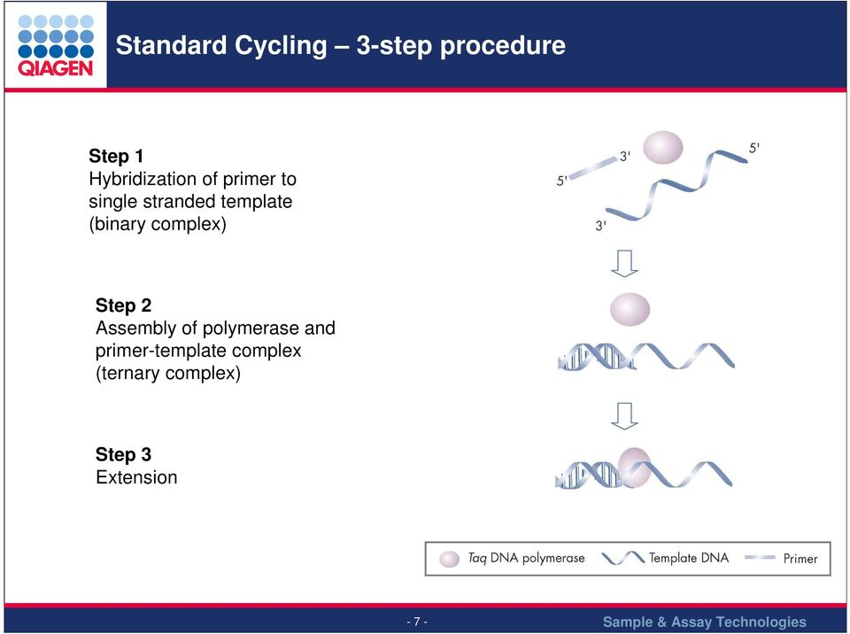 (binary complex) Step 2 Assembly of polymerase and