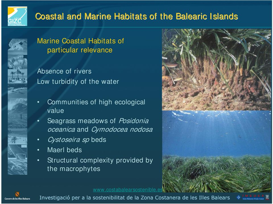 high ecological value Seagrass meadows of Posidonia oceanica and Cymodocea