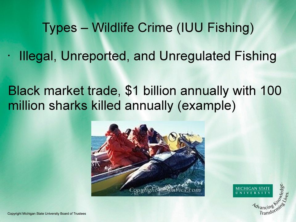 Fishing Black market trade, $1 billion