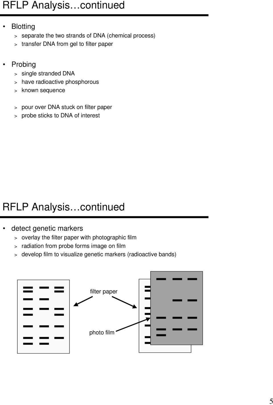 sticks to DNA of interest RFLP Analysis continued detect genetic markers > overlay the filter paper with photographic film >