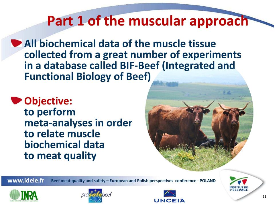called BIF-Beef (Integrated and Functional Biology of Beef) Objective: to
