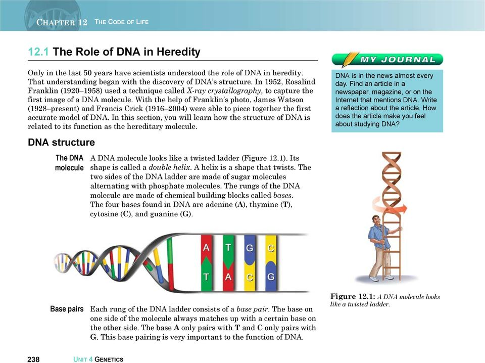 With the help of Franklin s photo, James Watson (1928 present) and Francis Crick (1916 2004) were able to piece together the first accurate model of DNA.