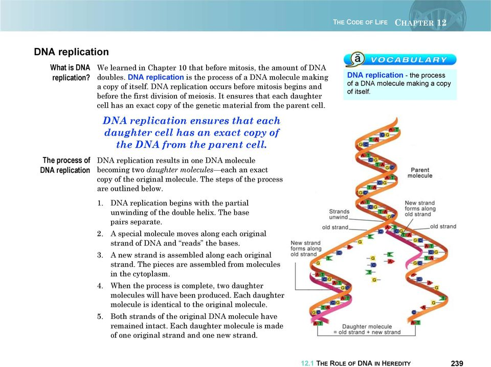 It ensures that each daughter cell has an exact copy of the genetic material from the parent cell. DNA replication ensures that each daughter cell has an exact copy of the DNA from the parent cell.