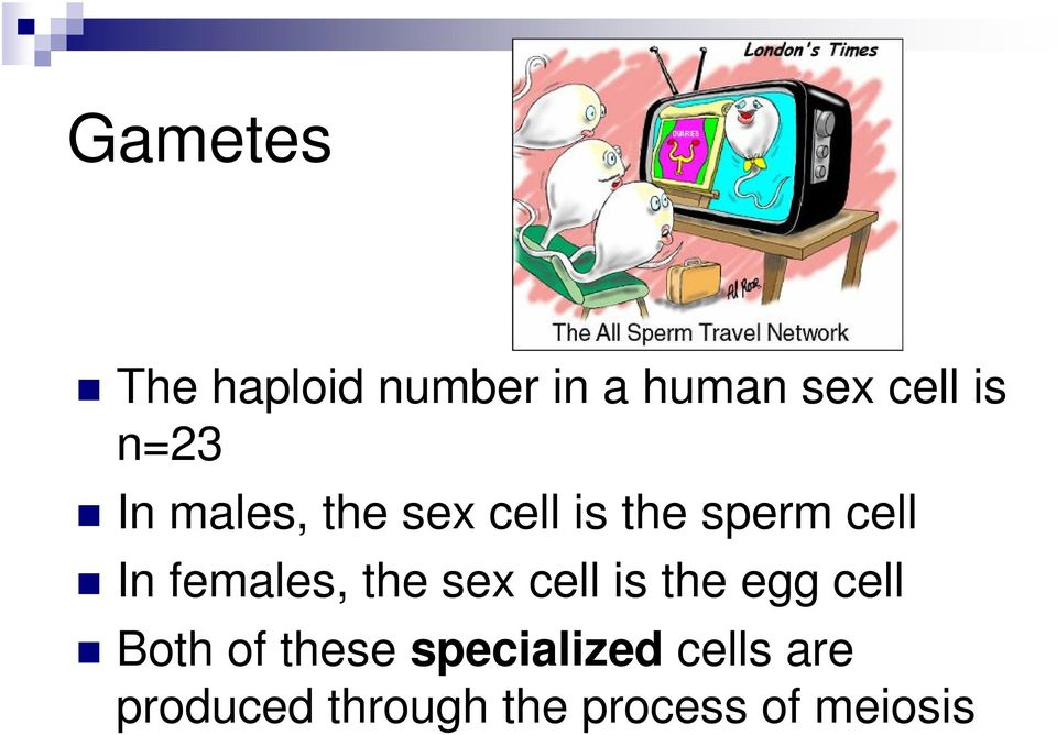 females, the sex cell is the egg cell Both of these