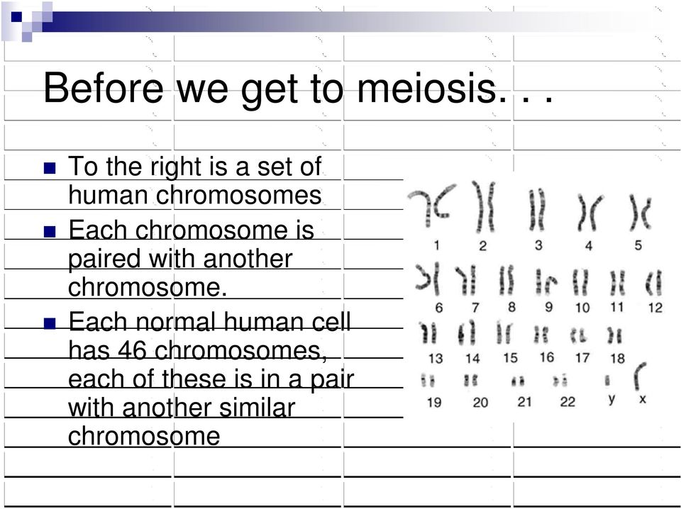 chromosome is paired with another chromosome.