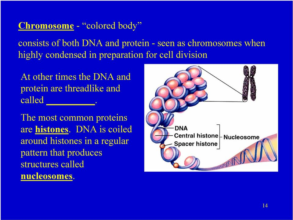 protein are threadlike and called. The most common proteins are histones.