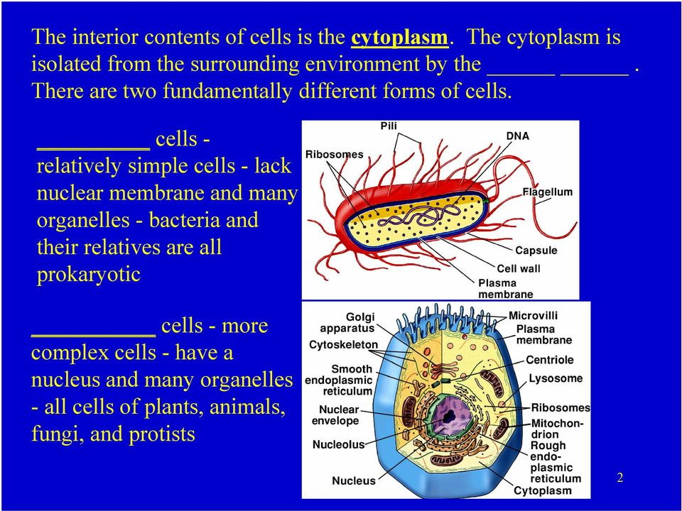 There are two fundamentally different forms of cells.