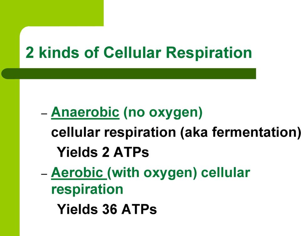 fermentation) Yields 2 ATPs Aerobic (with