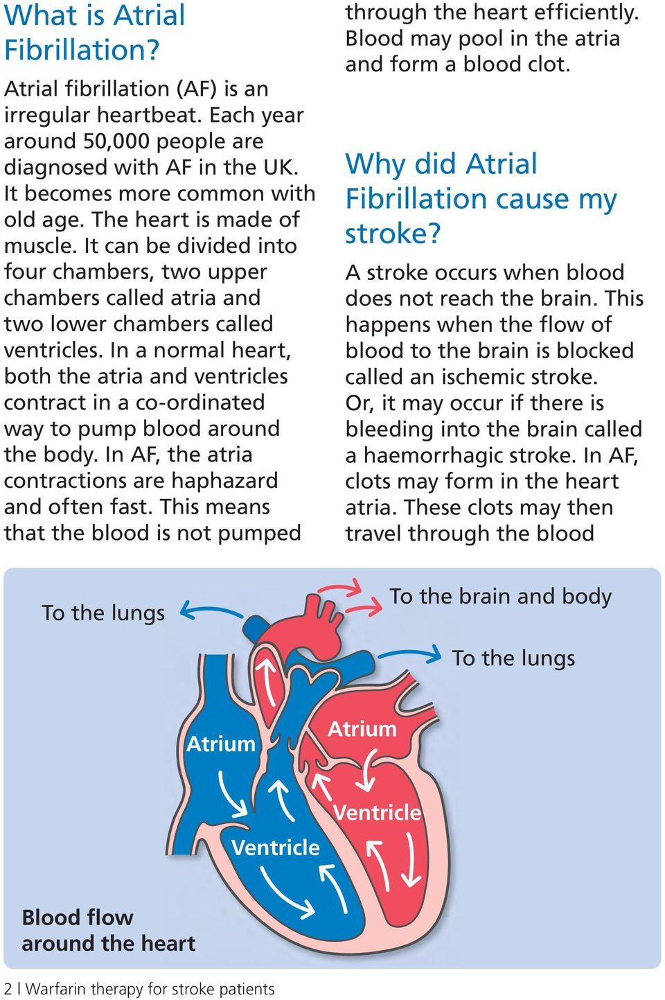 In a normal heart, both the atria and ventricles contract in a co-ordinated way to pump blood around the body. In AF, the atria contractions are haphazard and often fast.