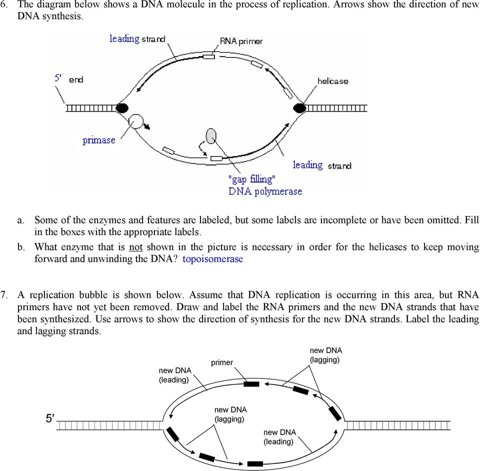 Bio 102 practice problems chromosomes and dna replication pdf topoisomerase 7 a replication bubble is shown below assume that dna replication is occurring malvernweather Choice Image