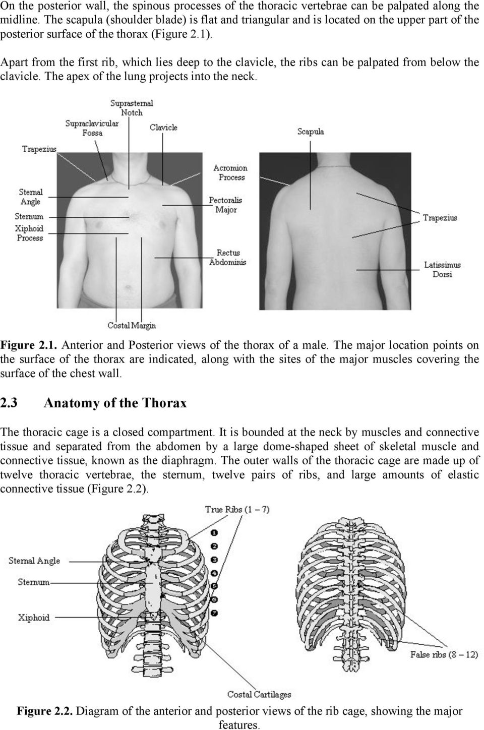 Apart from the first rib, which lies deep to the clavicle, the ribs can be palpated from below the clavicle. The apex of the lung projects into the neck. Figure 2.1.