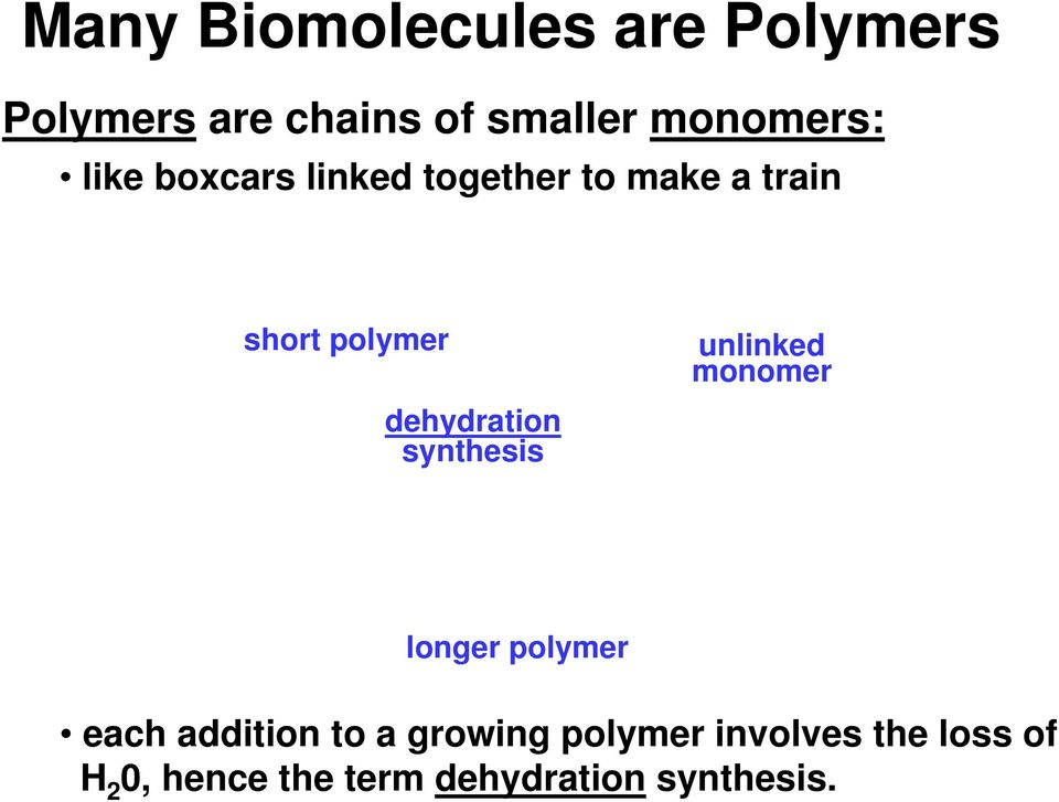 dehydration synthesis unlinked monomer longer polymer each addition to