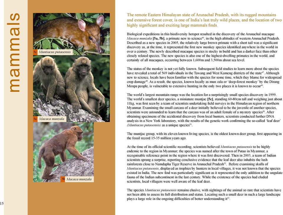 Biological expeditions in this biodiversity hotspot resulted in the discovery of the Arunachal macaque Macaca munzala [5a, 5b], a primate new to science 46, in the high altitudes of western Arunachal