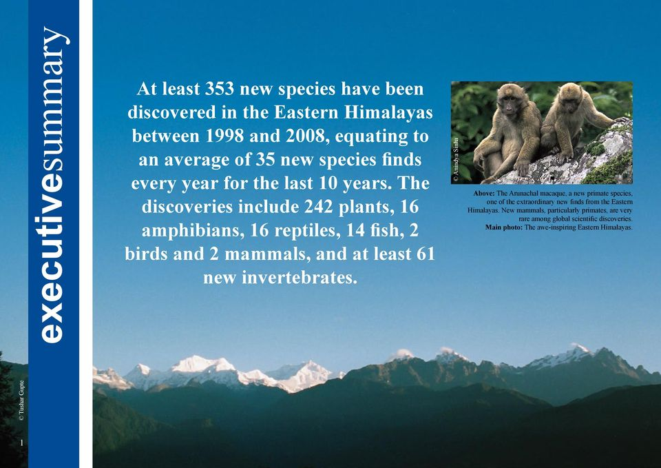 The discoveries include 242 plants, 16 amphibians, 16 reptiles, 14 fish, 2 birds and 2 mammals, and at least 61 new invertebrates.