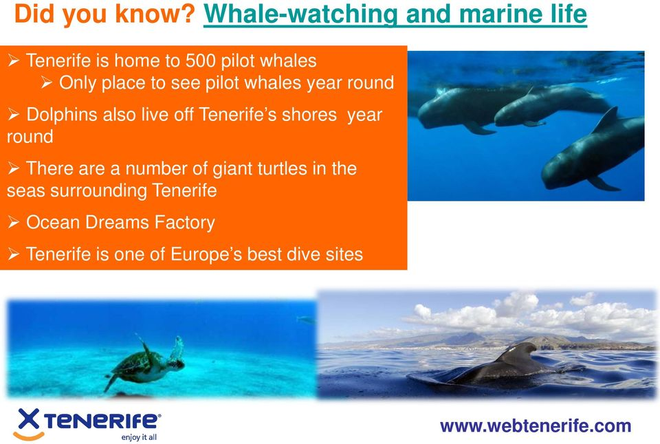 place to see pilot whales year round Dolphins also live off Tenerife s shores