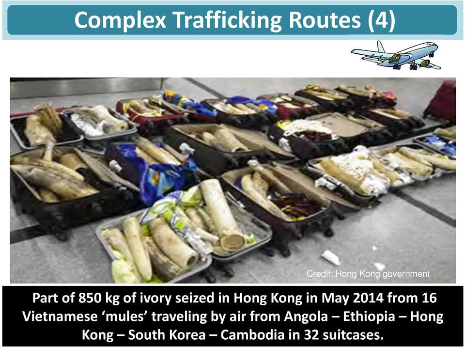 in May 2014 from 16 Vietnamese mules traveling by air