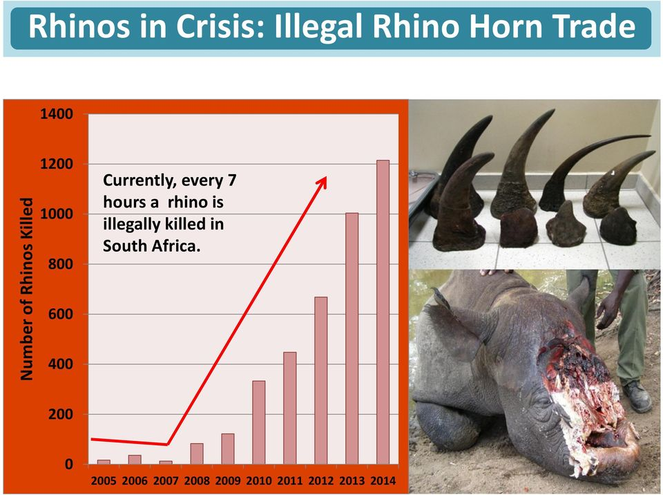 every 7 hours a rhino is illegally killed in South