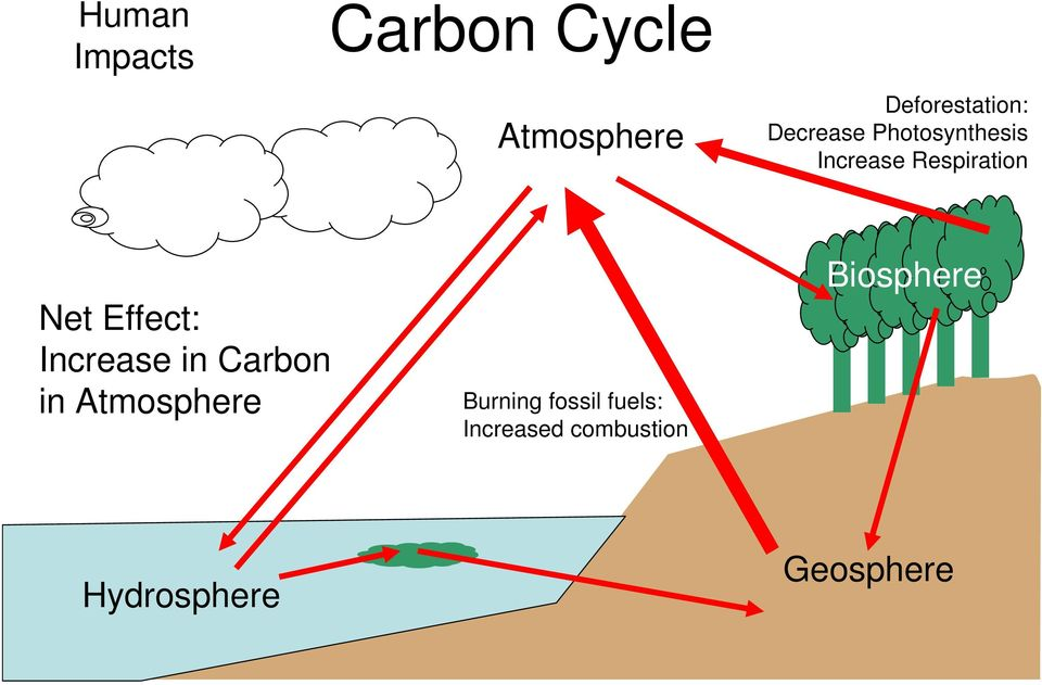 Effect: Increase in Carbon in Burning fossil