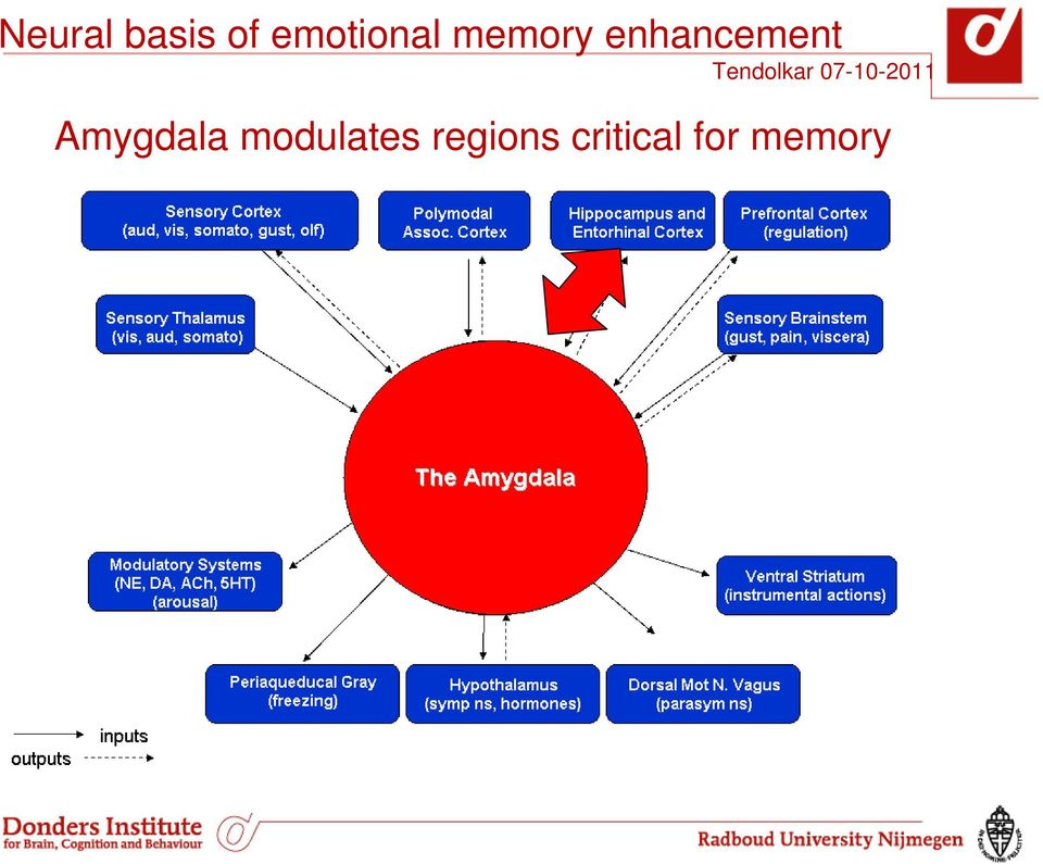 enhancement Amygdala