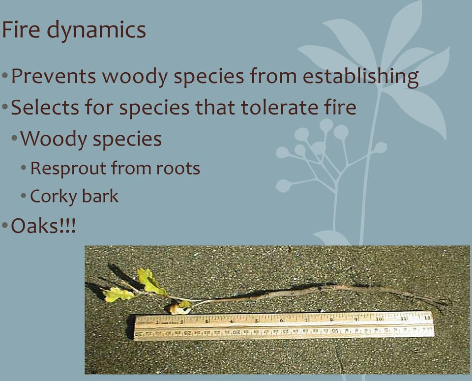 species that tolerate fire Woody