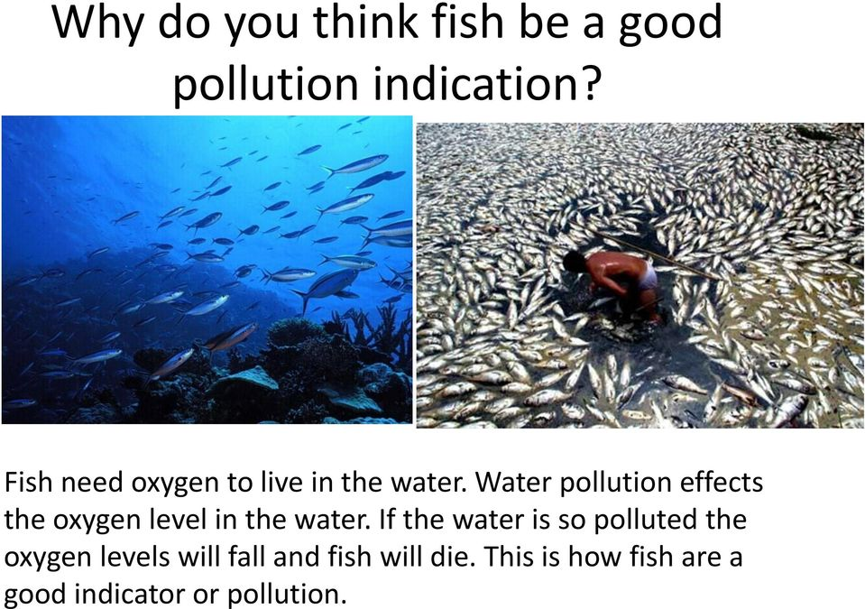 Water pollution effects the oxygen level in the water.