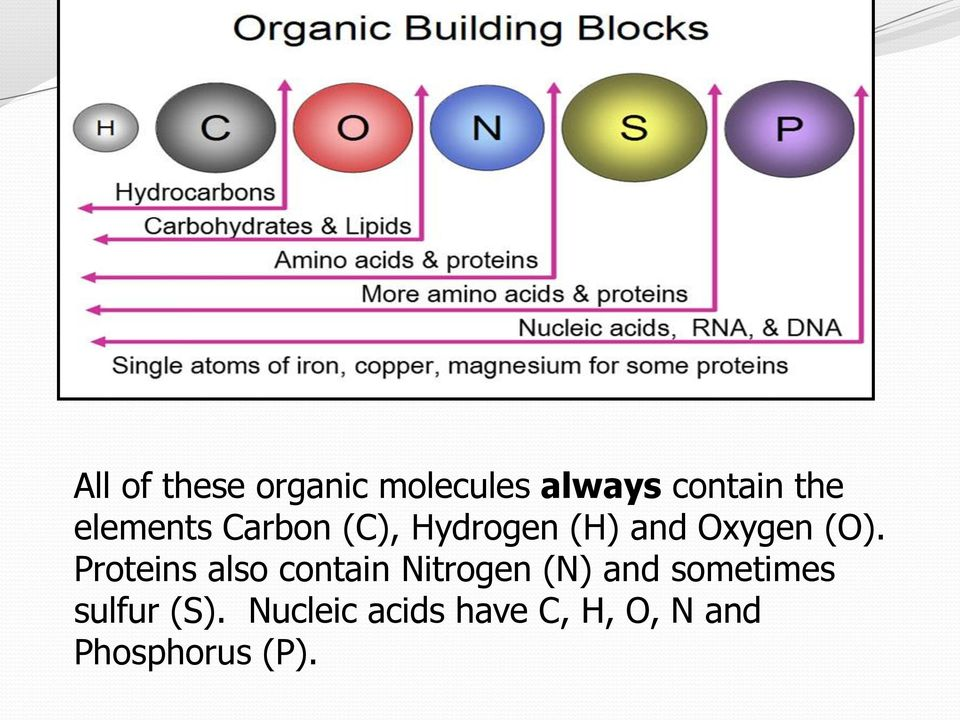 Proteins also contain Nitrogen (N) and sometimes