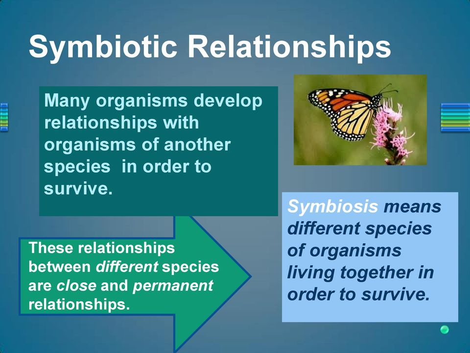 These relationships between different species are close and permanent