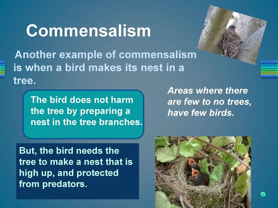 The bird does not harm the tree by preparing a nest in the tree branches.