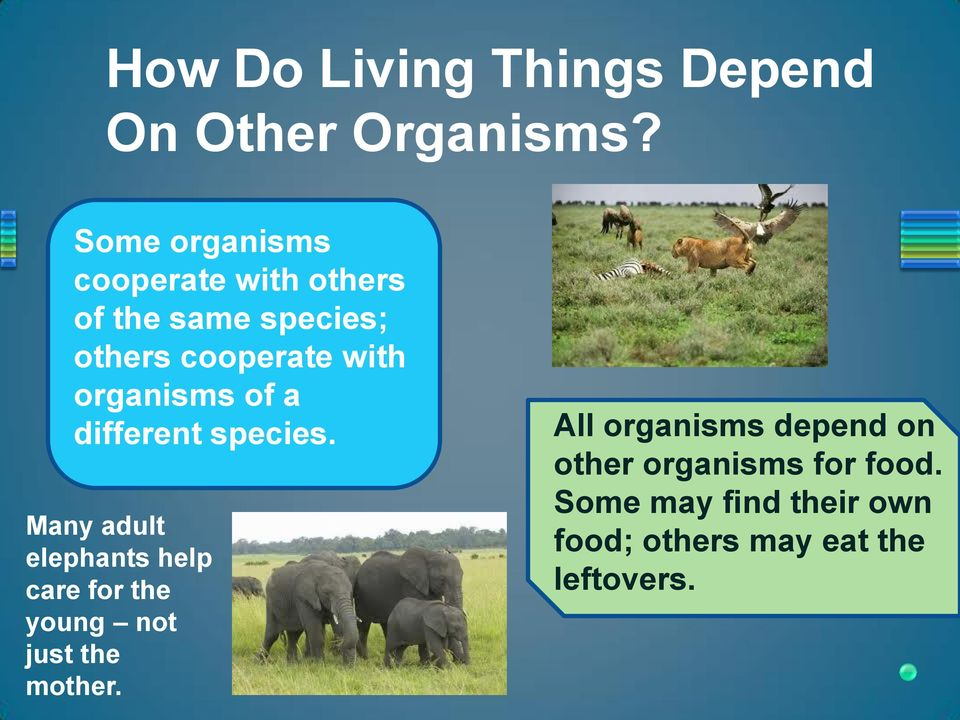 organisms of a different species.
