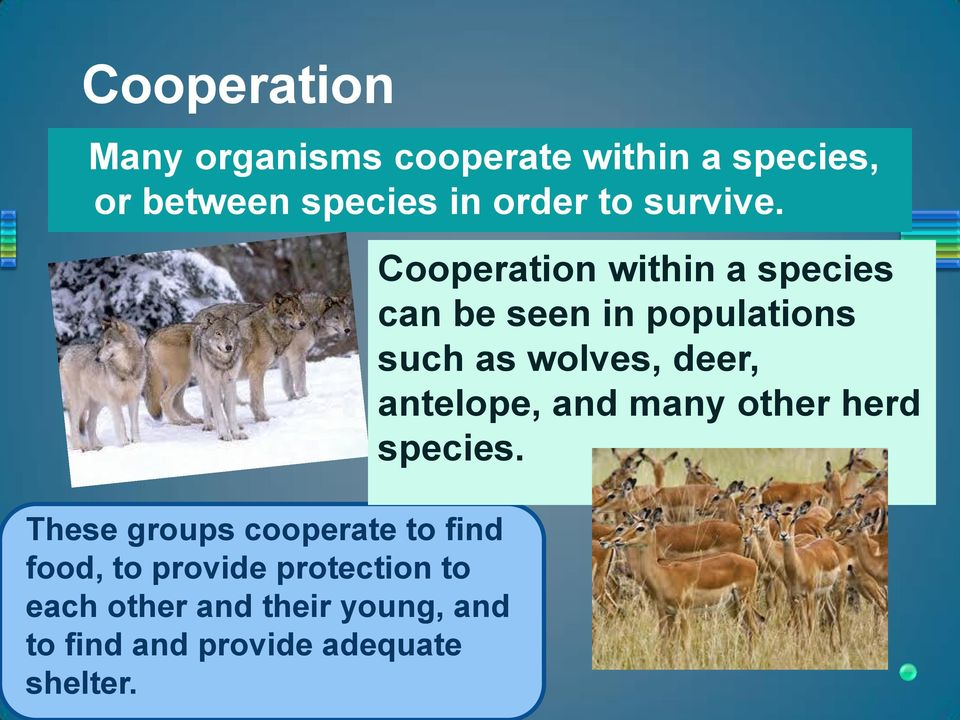 These groups cooperate to find food, to provide protection to each other and their