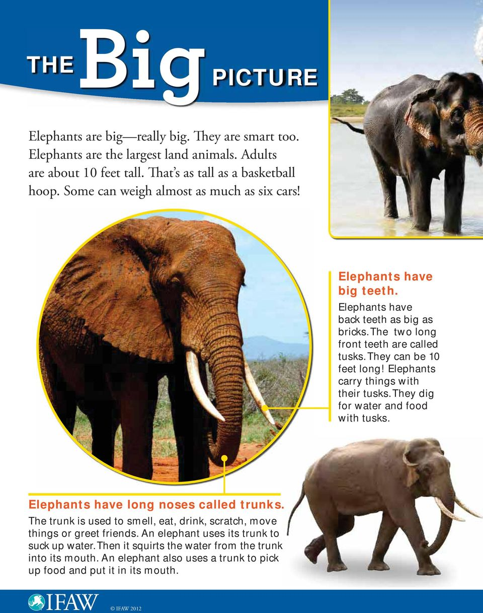 Elephants carry things with their tusks. They dig for water and food with tusks. Elephants have long noses called trunks.