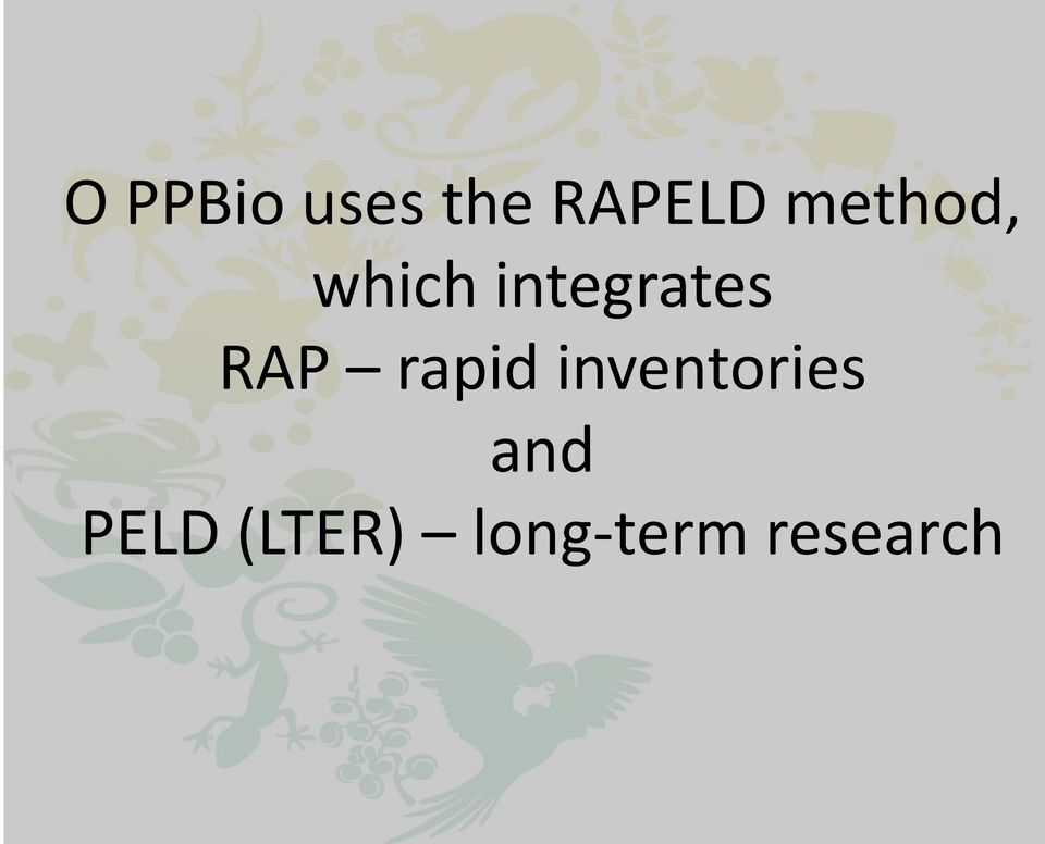 RAP rapid inventories and