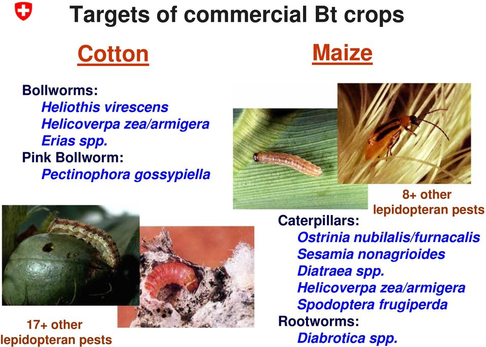 Pink Bollworm: Pectinophora gossypiella 17+ other lepidopteran pests 8+ other