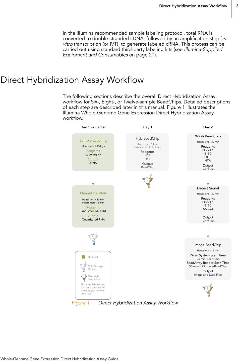 Direct Hybridization Assay Workflow The following sections describe the overall Direct Hybridization Assay workflow for Six-, Eight-, or Twelve-sample BeadChips.