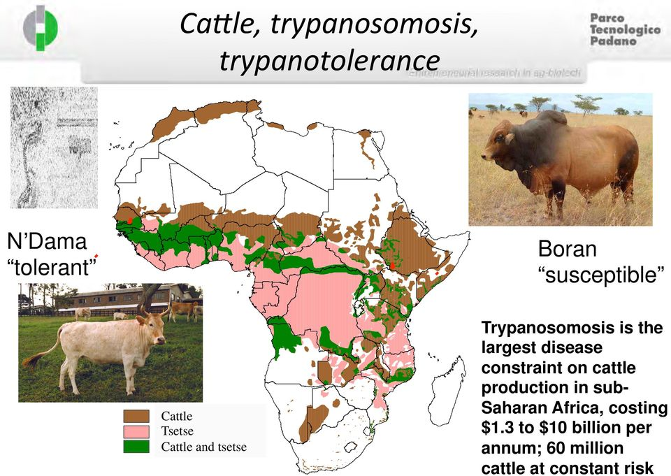 Trypanosomosis is the largest disease constraint on cattle production in sub-