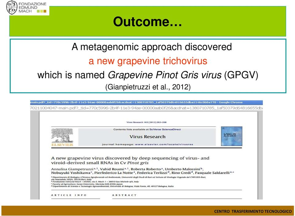 trichovirus which is named Grapevine