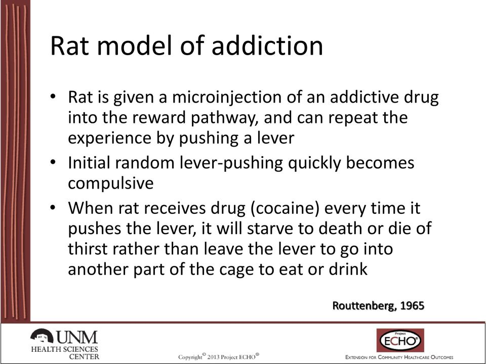 compulsive When rat receives drug (cocaine) every time it pushes the lever, it will starve to death