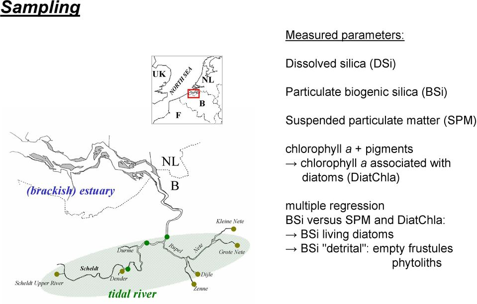 river NL B Rupel Nete Zee Kleie Nete chlorophyll a + pigmets chlorophyll a associated with diatoms