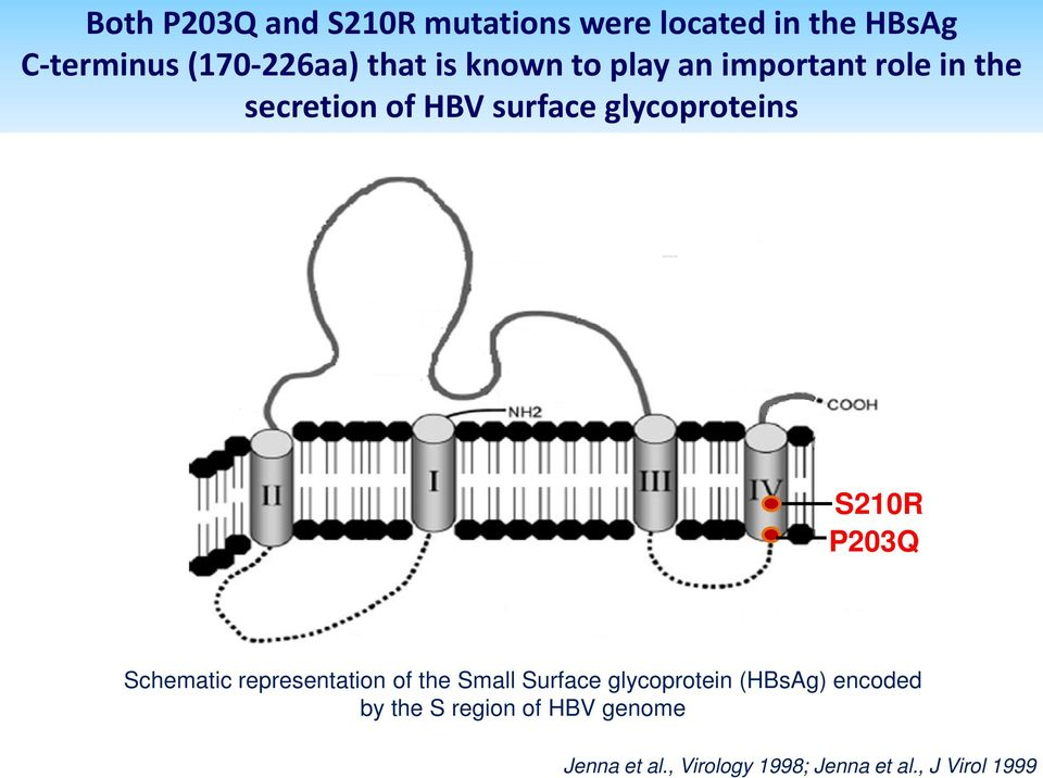 S210R P203Q Schematic representation of the Small Surface glycoprotein () encoded