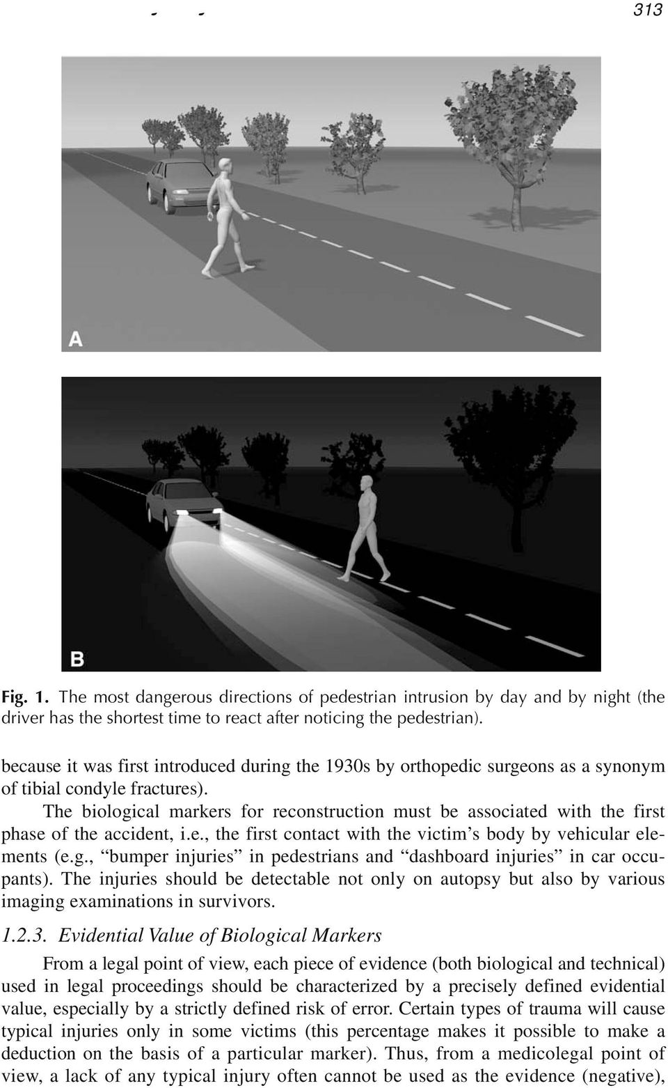 The biological markers for reconstruction must be associated with the first phase of the accident, i.e., the first contact with the victim s body by vehicular elements (e.g., bumper injuries in pedestrians and dashboard injuries in car occupants).