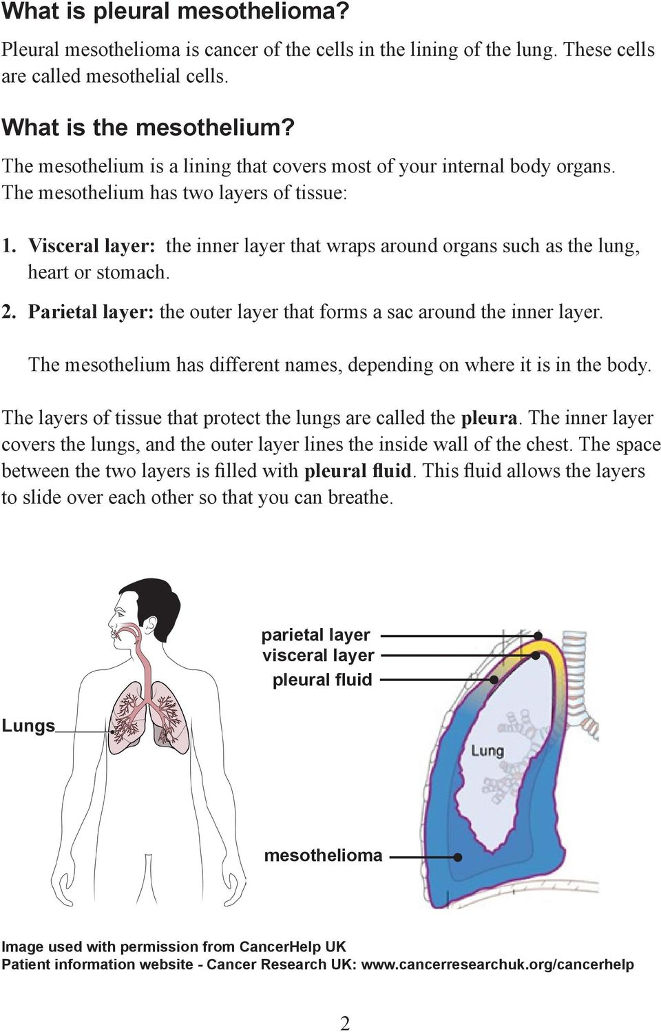 Visceral layer: the inner layer that wraps around organs such as the lung, heart or stomach. 2. Parietal layer: the outer layer that forms a sac around the inner layer.
