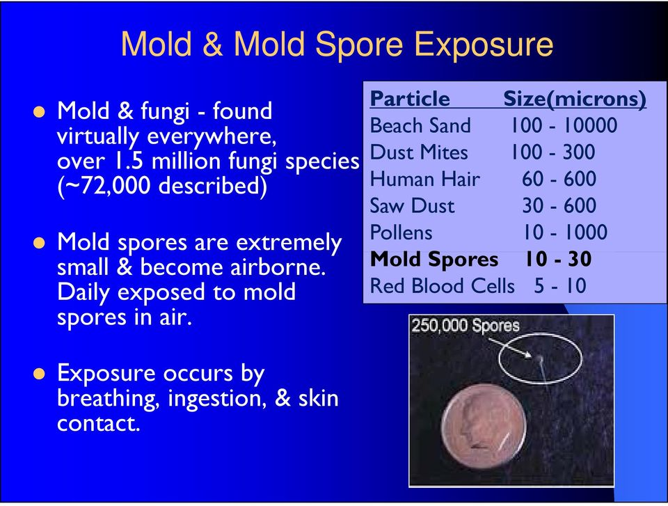 Daily exposed to mold spores in air.