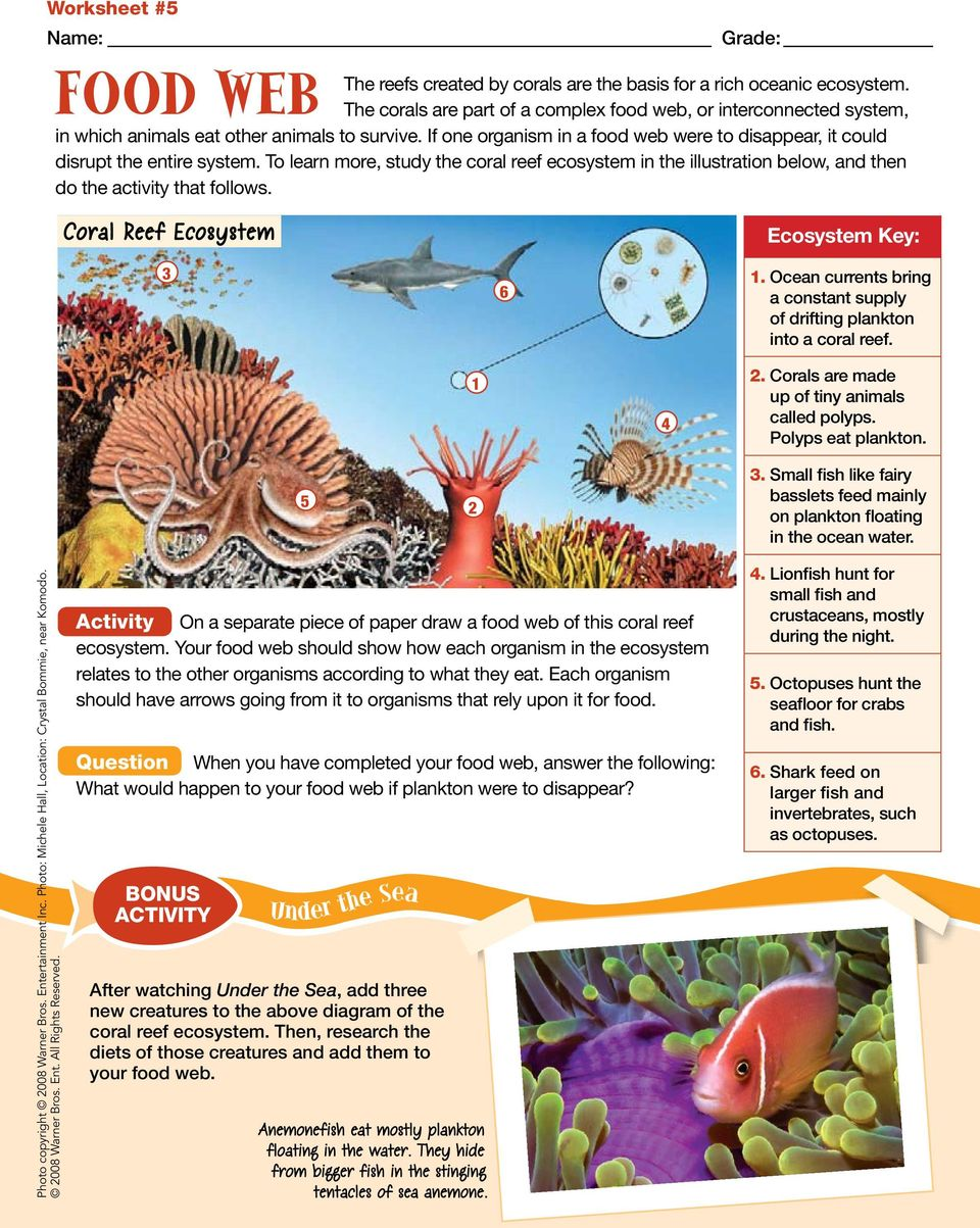 To learn more, study the coral reef ecosystem in the illustration below, and then do the activity that follows. Coral Reef Ecosystem 3 6 Ecosystem Key: 1.