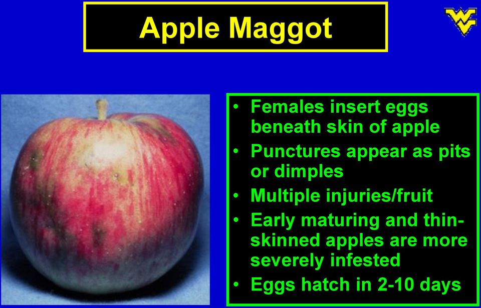 injuries/fruit Early maturing and thinskinned